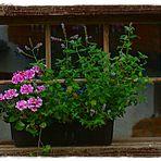 Altes Stall-Fenster # 2