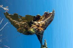 Altholz im See