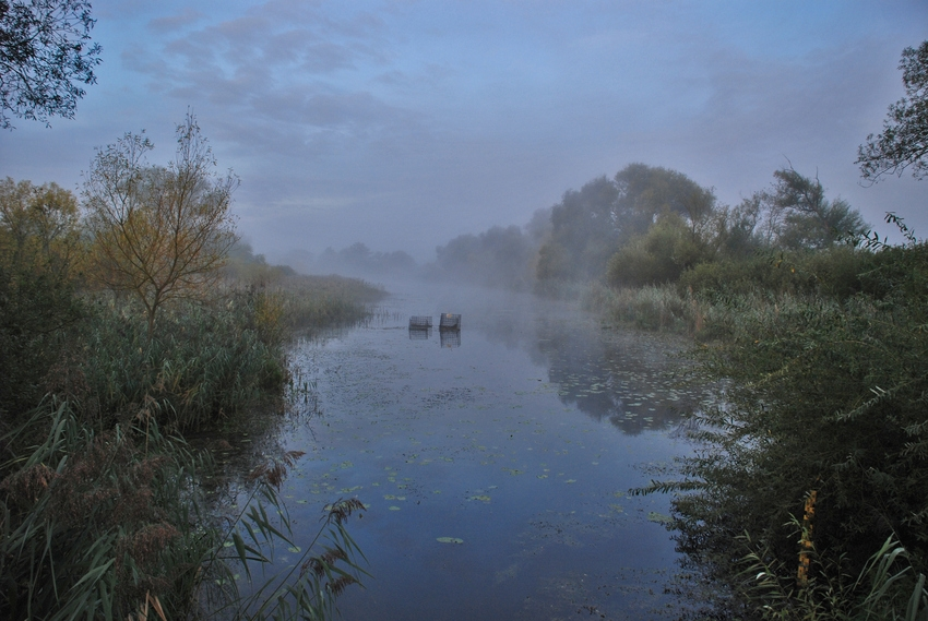 Altrhein-Morgen