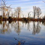 Altwasser (Donau)