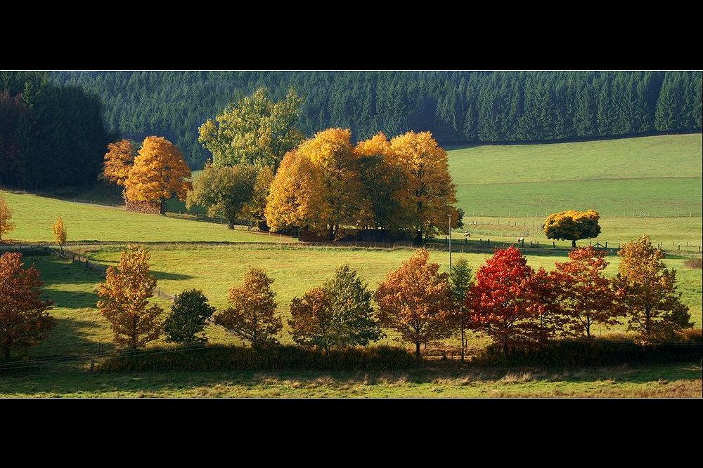 *** Altweibersommer oder Herbst ***