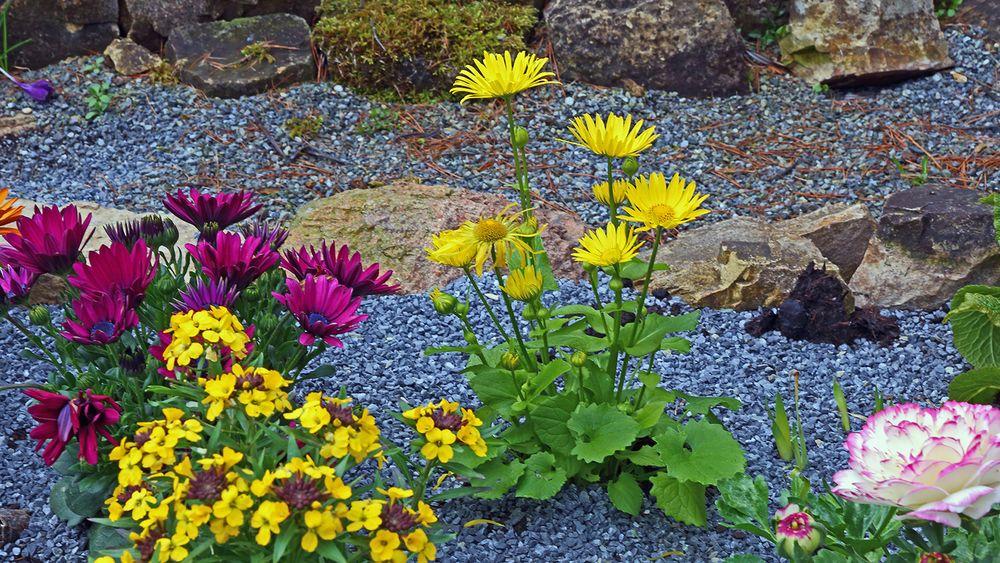 Am 05.04. 2021  die Verabschiedung von diesen Blüten im Garten...