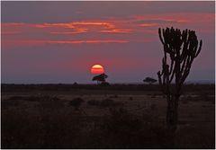 Am Abend in der Massai-Mara