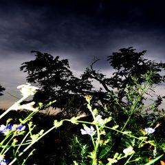 Am Abend in der Streuobstwiese