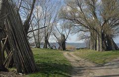 am Achterwasser, Usedom (2.)
