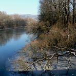 - am alten Neckar -