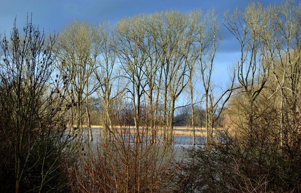 ..am Altrhein