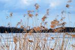 Am Barleber See