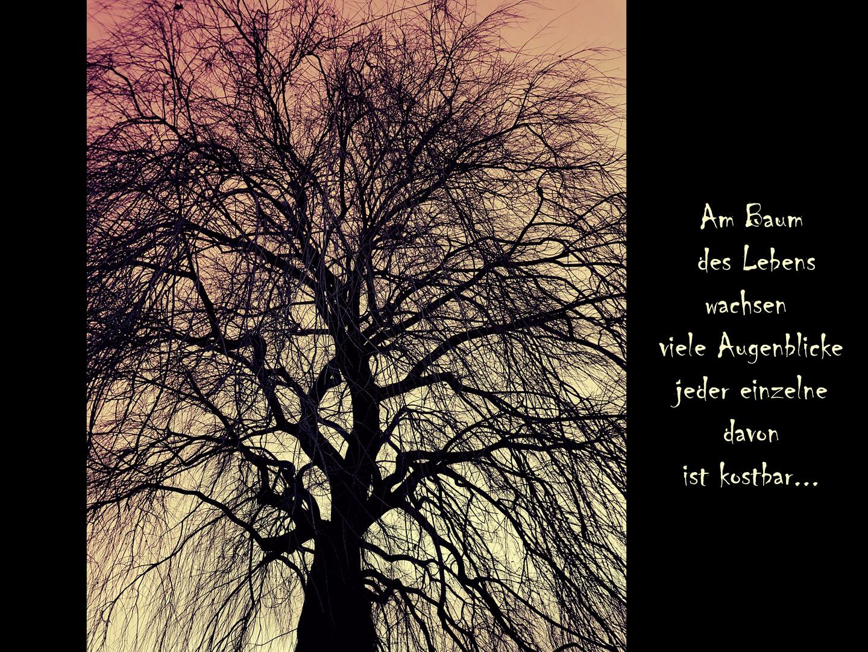 Am Baum Des Lebens Foto Bild Spezial Bäume Winter Bilder