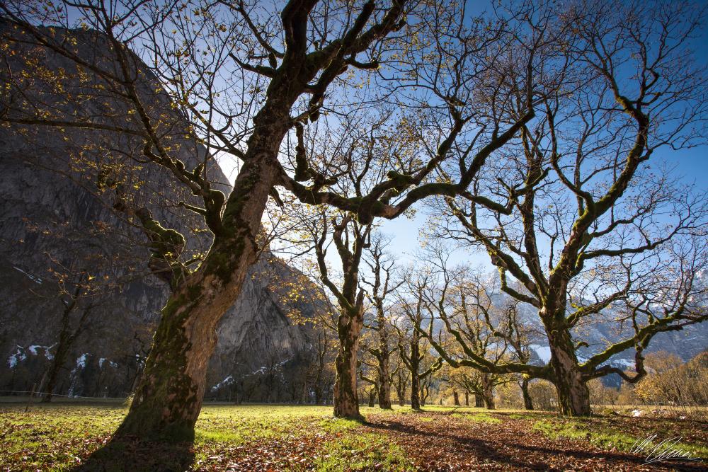 Am Boden der Bäume