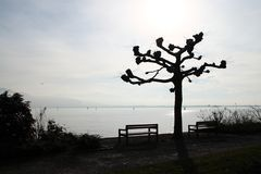 am Bodensee...
