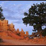 Am Bryce Canyon, bevor die Sonne da war...