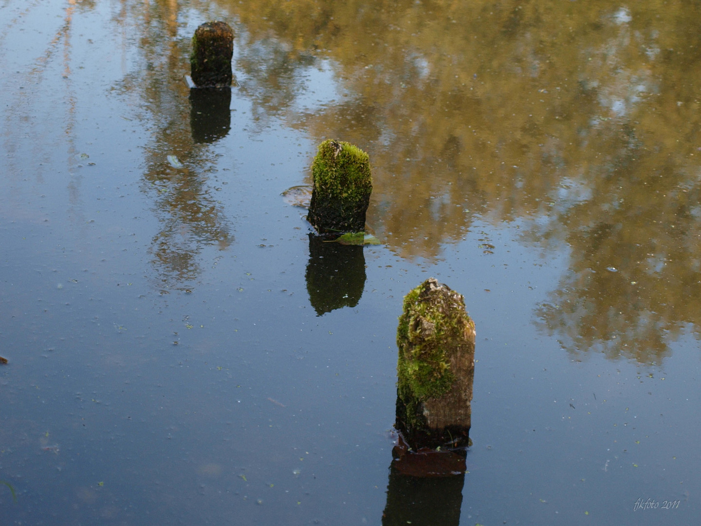Am De Wittsee