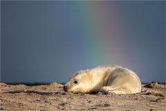 Am Ende des Regenbogens liegt ein Goldschatz..