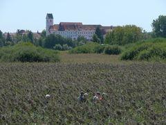 Am Federsee bei Bad Buchau (UNESCO Weltkulturerbe)