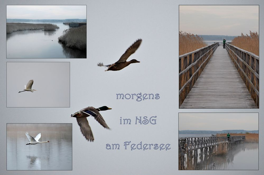 am Federsse -2-
