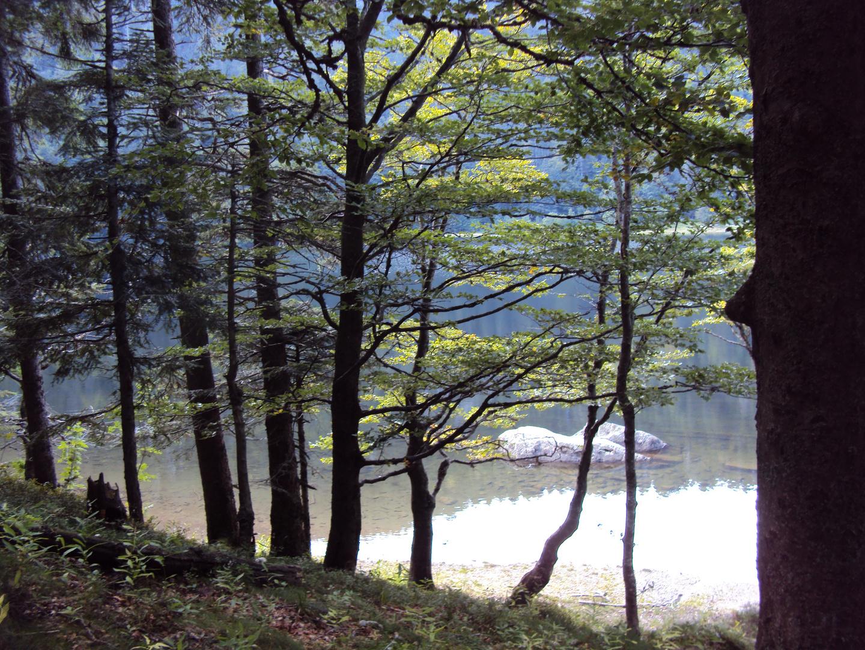Am Feldsee (Hochschwarzwald)