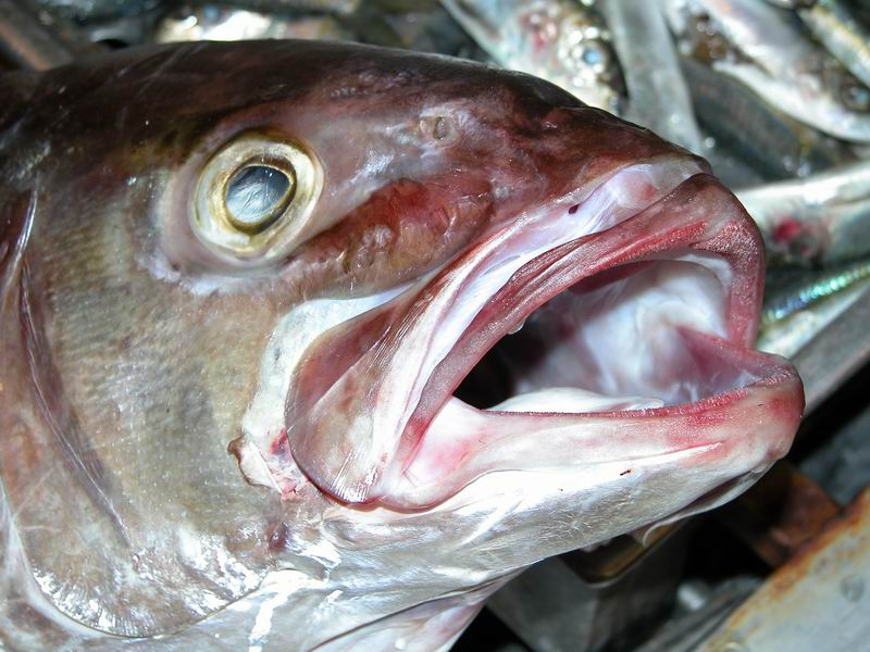 Am Fischmarkt von Antalya