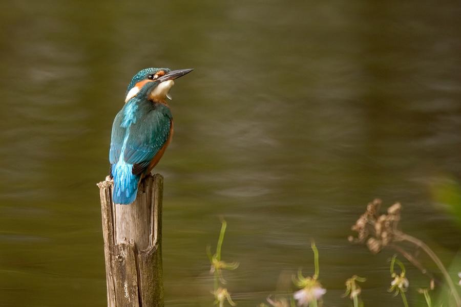 am Fischweiher