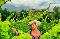 Am Fuß von Schloss Johannisberg