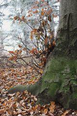 Am Fusse des Baumes...