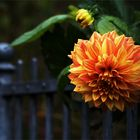 Am Gartenzaun . . .