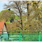 Am Geländer der Kanalbrücke Lohgraben
