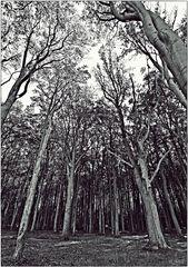 Am Gespensterwald