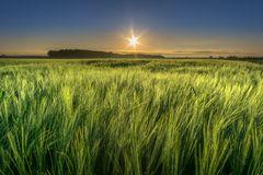 Am Getreidefeld