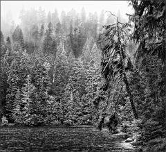 Am Glaswaldsee