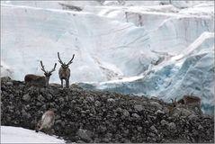 Am Gletscher...