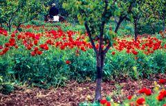 Am Golf v. Korint. Griechenland.                  ..DSC_6749