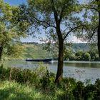Am grünen Ufer der Mosel (2)