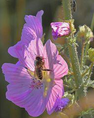 am kleinen Feldweghang : Bienchen und Käfers erste Morgensonne,