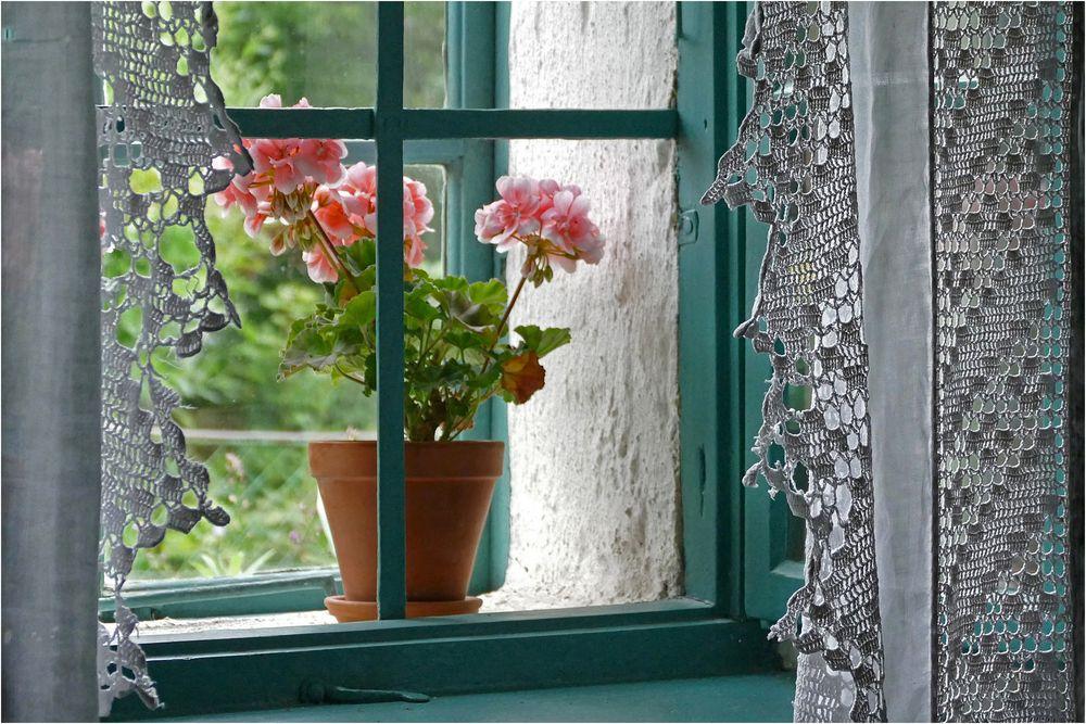 Am Küchenfenster...