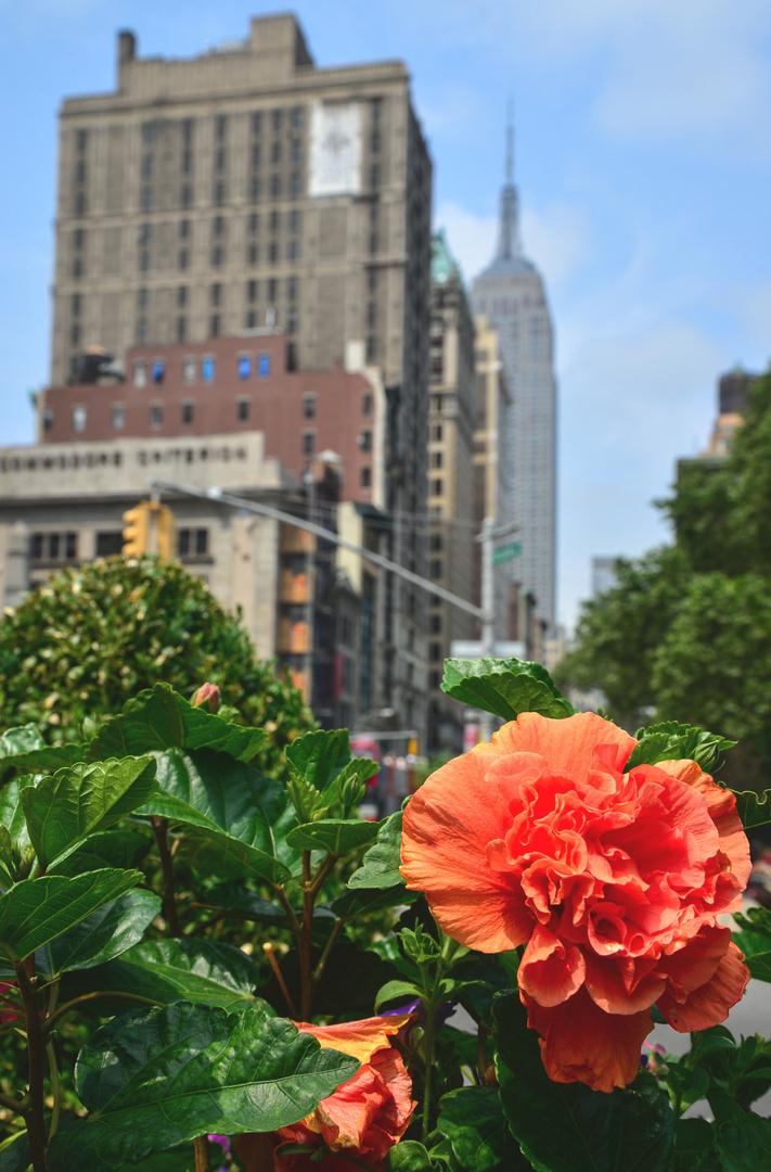am Madison Square Park