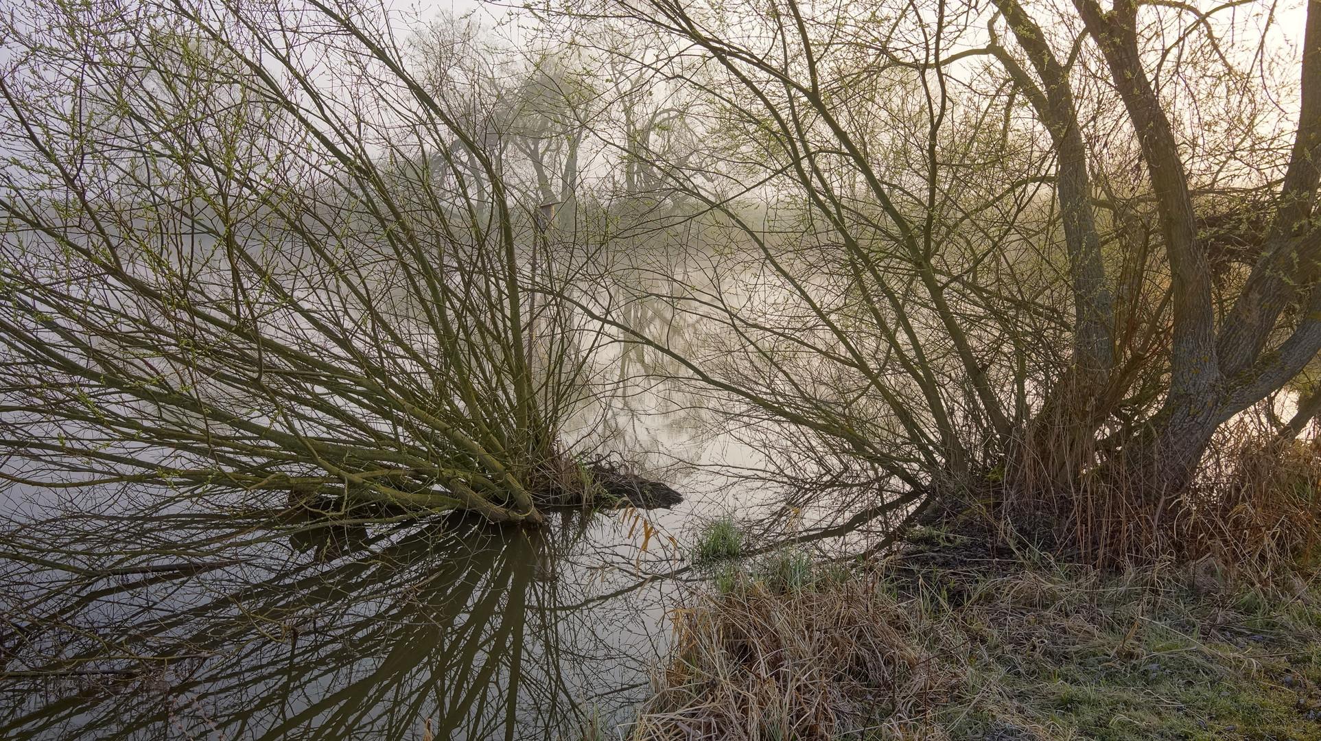 Am Morgen am See II (por la mañana en el lago II)