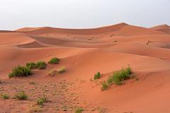 Am Morgen in der grandiosen Dünenlandschaft des Erg Chebbi