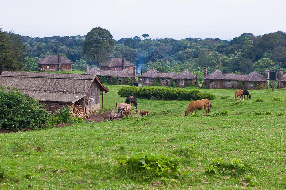 Am Mt. Kenya