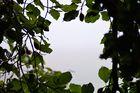 Am nebligen Herbstmorgen