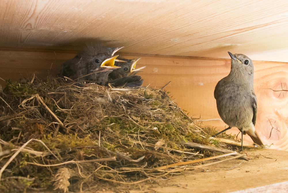 Am Nest
