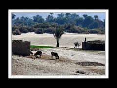Am Nil zwischen Edfu und Kom Ombo 1