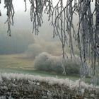 Am Oberrhein- Klettgau- bei Erzingen - -4 Grad