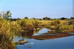 Am Olifantfluss 2