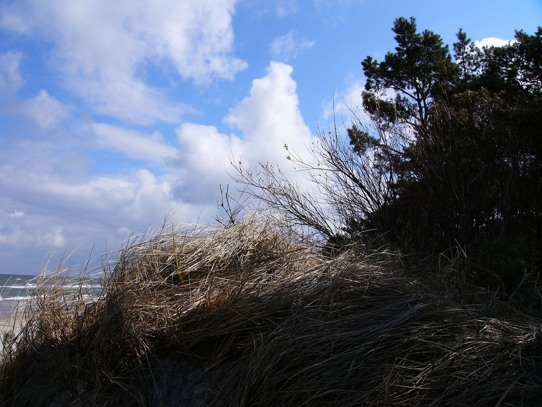 Am Ostseestrand von Niechorze (Horst) in Hinterpommern