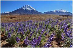 Am Paso de Jama/ Argentinien in 4400m Höhe