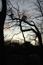 Am Scheuermühlenteich zur blauen Stunde-jetzt sind die Blätter weg