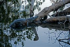 Am See der Krokodile