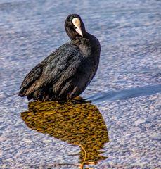 Am See - Komischer Schatten! Bin ich  doch eine Krähe?