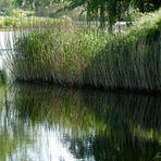 Am See mit Spiegelung